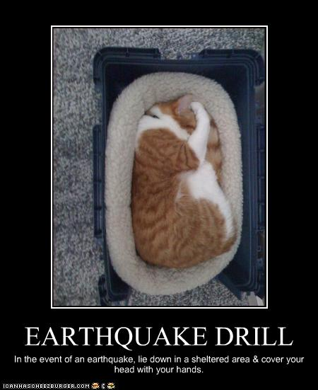 I FKN LOVE CALIFORNIA - Page 2 Funny-pictures-cat-has-an-earthquake-drill1